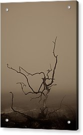 Desolation Acrylic Print