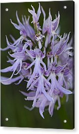 Detail Of A Orchid Acrylic Print by Perry Van Munster