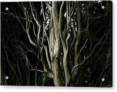 Detailed View Of The Branches Of A Tree Acrylic Print by Todd Gipstein