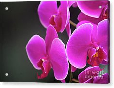 Details In Soft Colors  Acrylic Print