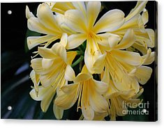 Details In Yellow And White Acrylic Print by John S