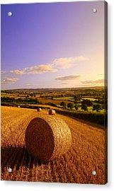 Devon Haybales Acrylic Print by Neil Buchan-Grant