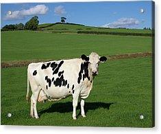 Devon Milk Factory Acrylic Print