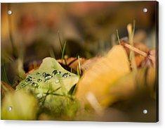 Dew And Gingko  Acrylic Print by Bulik Elena