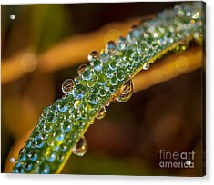Dew Drop Reflection Acrylic Print