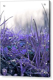 Dew Drops Magic Two Acrylic Print by Robert Ball
