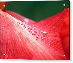 Dew Drops On A Wave Of Red Acrylic Print