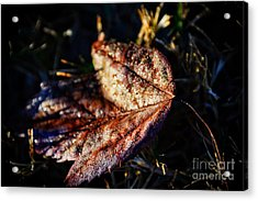 Dew Drops Sparkling And Showing Life On A Leaf -georgia Acrylic Print