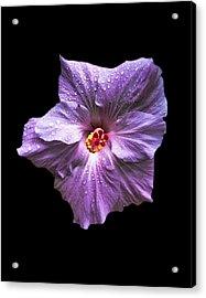 Dew Kissed Hibiscus Acrylic Print