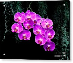 Acrylic Print featuring the photograph Dew-kissed Orchids by Sue Melvin