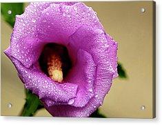 Dew On The Flower Acrylic Print