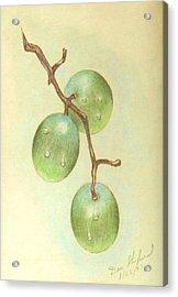 Dew On White Grapes Acrylic Print by Daniel Shuford