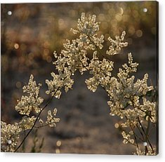 dew Acrylic Print by Renee Holder