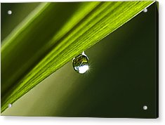 Dewdrop On A Blade Of Grass Acrylic Print by Michael Whitaker