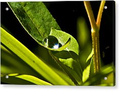 Dewdrop On A Leaf Acrylic Print by Michael Whitaker