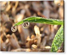 Dewdrops Acrylic Print by Gouzel -