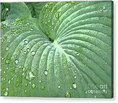 Dewdrops On A Hosta Acrylic Print by Addie Hocynec