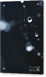 Dewdrops On Cobweb 004 Acrylic Print