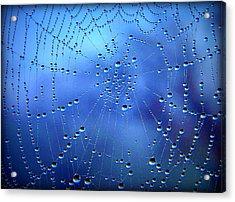 Dewed Web II Acrylic Print