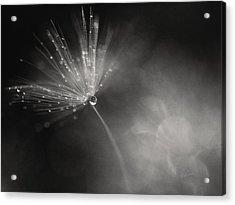 Dewy Dandelion Fireworks Acrylic Print