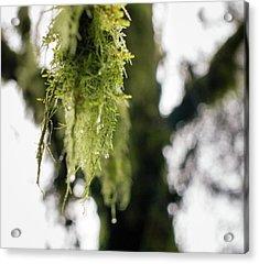 Dewy Moss Acrylic Print