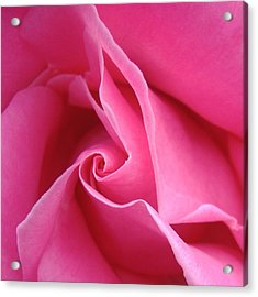 Diagonal Of Rose Acrylic Print by Jacqueline Migell