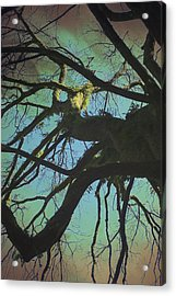 Acrylic Print featuring the photograph Dialogue  by Connie Handscomb
