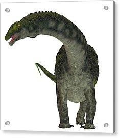 Diamantinasaurus Dinosaur On White Acrylic Print