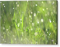Diamond Sparkles. Green World Acrylic Print by Jenny Rainbow