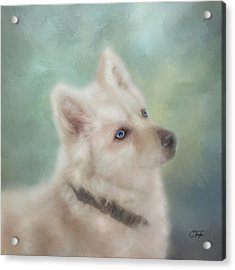 Acrylic Print featuring the mixed media Diamond, The White Shepherd by Colleen Taylor