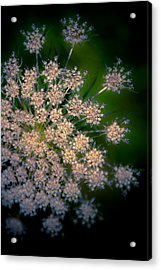 Diamonds Are Forever Acrylic Print by Loriental Photography