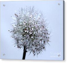 Diamonds Of Nature Acrylic Print