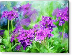 Dianthus Flowers Acrylic Print by Frank Tschakert