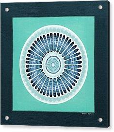 Diatom Mandala, Arachnoidiscus Acrylic Print