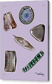 Diatoms Acrylic Print by David Salter