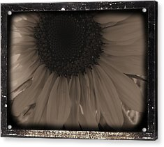 Diatrop Three Quarter Sunflower Acrylic Print