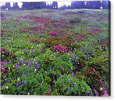 Dickerman Floral Meadow Acrylic Print