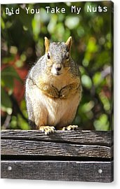 Did You Take My Nuts Acrylic Print by James Steele
