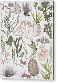 Different Strains Of Seaweed. From Acrylic Print by Vintage Design Pics