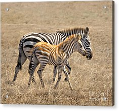 Different Stripes Acrylic Print