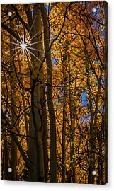 Diffraction Action Acrylic Print by Gary Migues