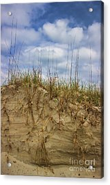 Digging In Deep In Sand Dunes Acrylic Print