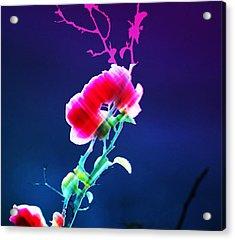 Digital 1 Acrylic Print