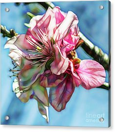 Digital Artistic Print Of Cherry Blossoms Acrylic Print by Photo Captures by Jeffery