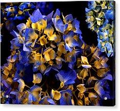 Acrylic Print featuring the photograph Digital Hydrangea by Lynda Lehmann