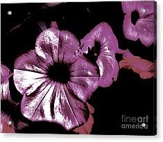 Digital Petunia Acrylic Print by Marsha Heiken
