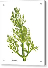 Dill Plant Acrylic Print