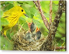 Dinner At The Warblers Acrylic Print