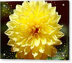 Dinner Plate Dahlia In Starry Sky Acrylic Print