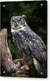 Dinner Time Acrylic Print by Tracy Munson
